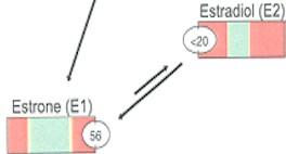 estrogen1